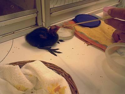 vogel asiel de wulp